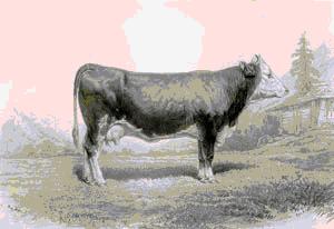 vaca de Berna